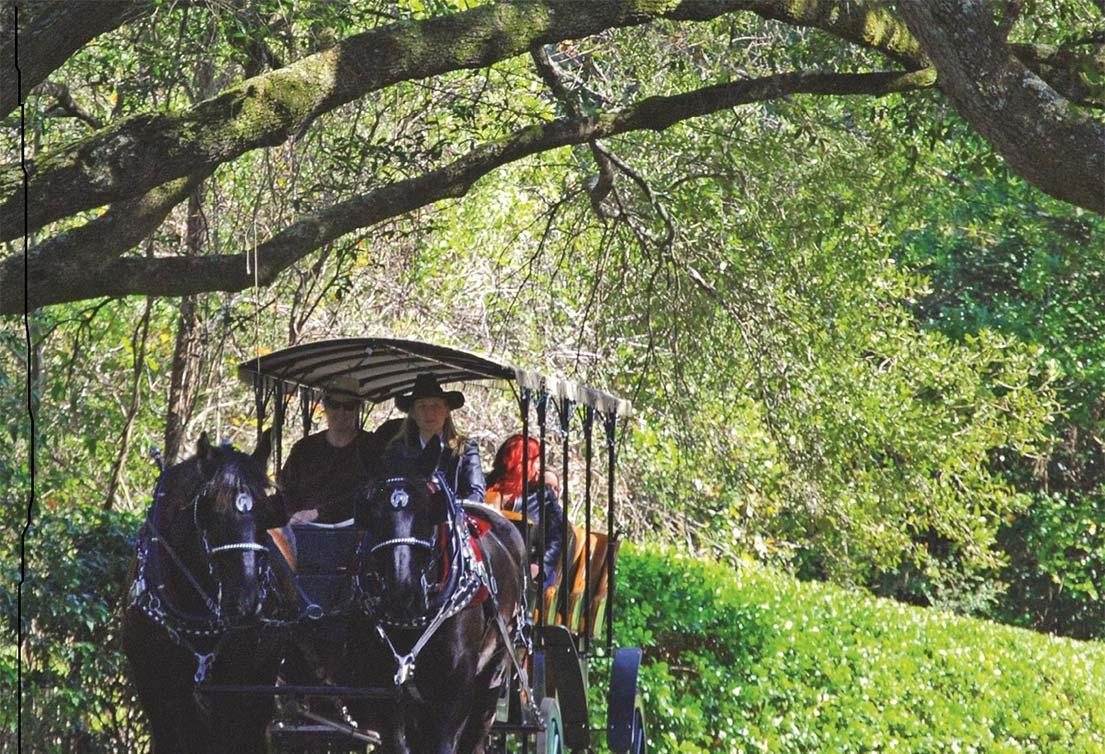 Carriage ride through the park